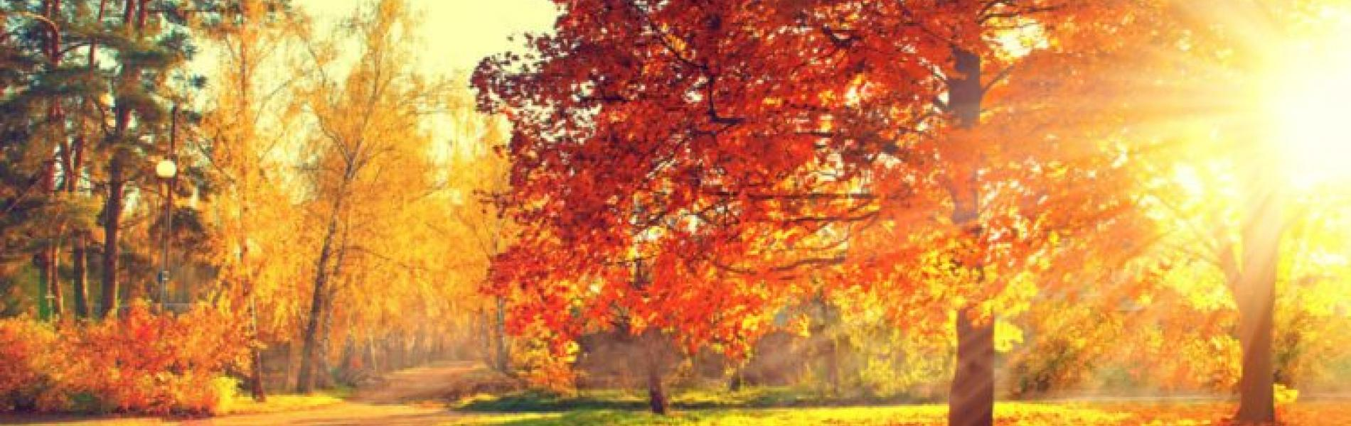 Fall and Sun